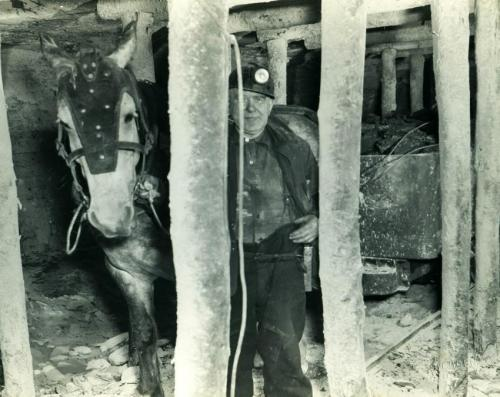 Miner with pit pony underground hauling tubs of coal in the No. 20 colliery, Glace Bay, 1952. The low roof and wooden poles show the confined and dangerous space in the mine.